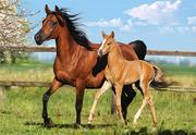 Куплю лошадь в Могилевской области