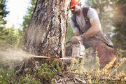 Спил участка,  уборка деревьев
